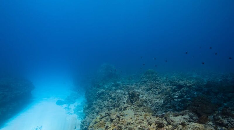 Seal Rocks og kingfish